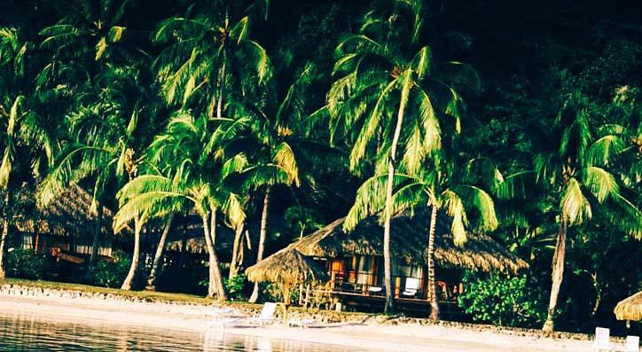 палми