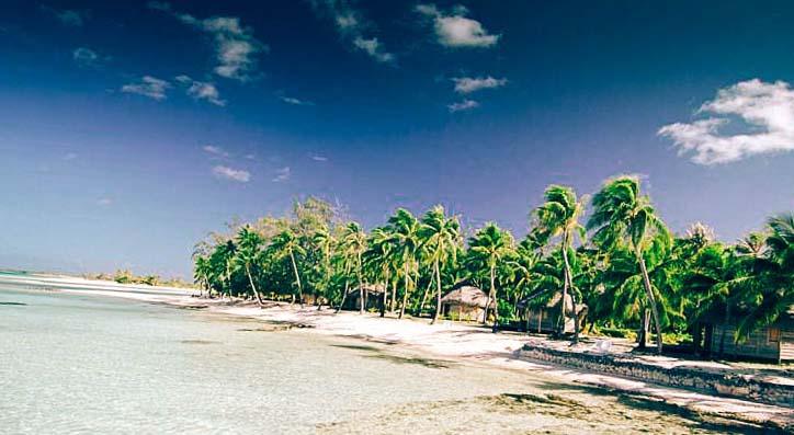 Палми на брега