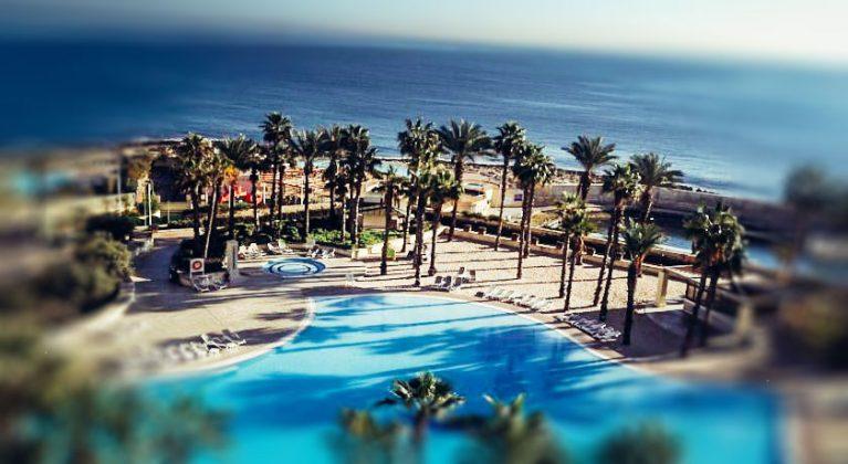 Palmer på Hilton Malta